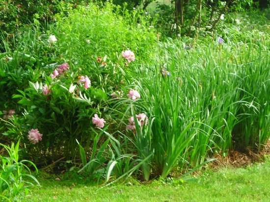 Shaker Meadows Bed and Breakfast : the front garden , last summer