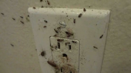 Ramada Pooler/savannah : Cockroaches from plug