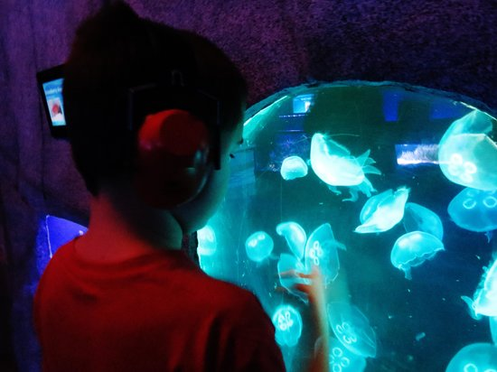 Portland Aquarium: Jellyfish!