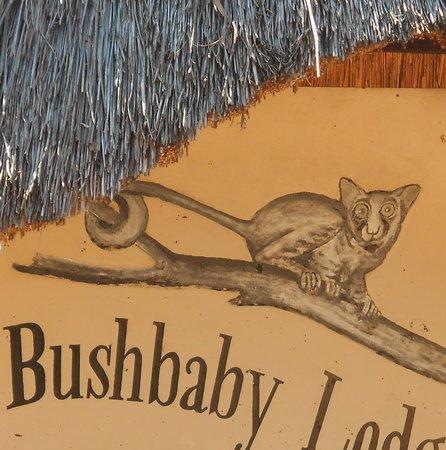 Bushbaby Lodge: Off the beaten track