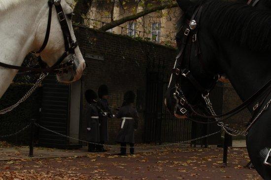 Photo Walks of London: Guard horses