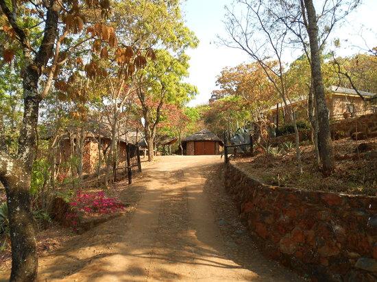 Bushbaby Lodge driveway