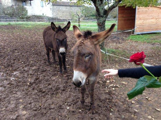 Les ânes de Lou Repaou