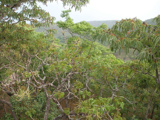 Bushbaby Lodge: Miombo woodland in spring