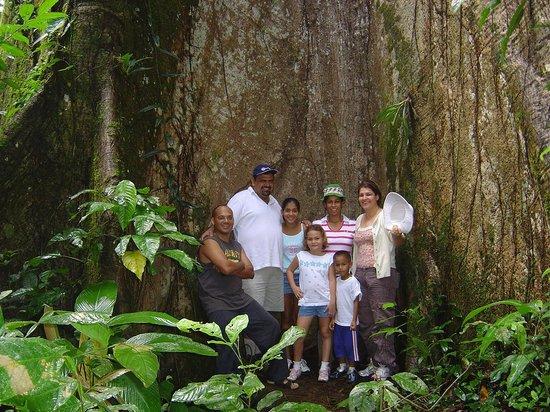 Cabinas El Castillo: El Ceibo de la Paz