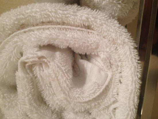 Best Western Valencia Inn: hair in towels, gross!