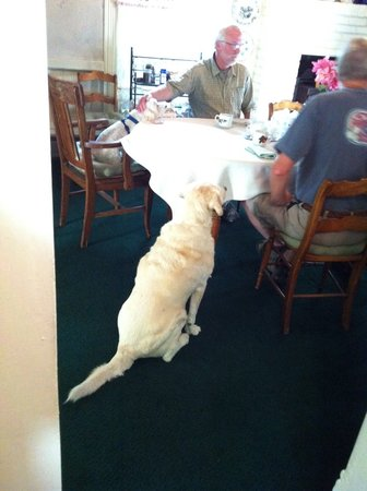 Dream Inn Mount Shasta: Yes.. Dream Inn is very Pet Friendly!!