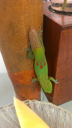 Hale Ho'ola B&B : Very sweet and friendly, the geckos.