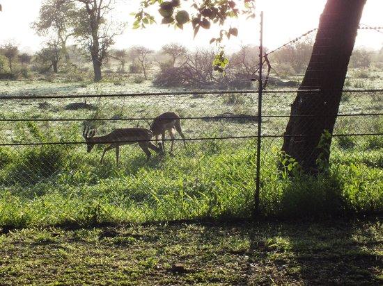 Satara Rest Camp: Vroeg in de morgen voor het huisje