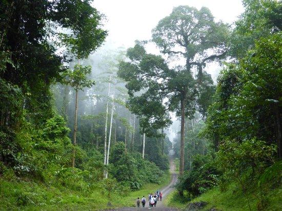 All Borneo Connection - Day Tours : Danum Valley - alberi maestosi