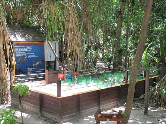 All Borneo Connection - Day Tours : Lankayan - dove si aspetta la schiusa delle uova di tartaruga