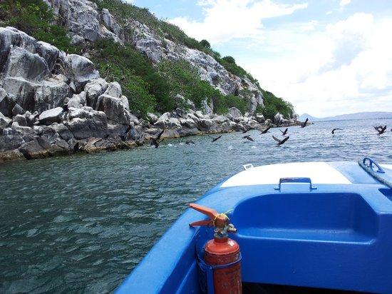 Sunbird Nkopola Lodge: Bird Island