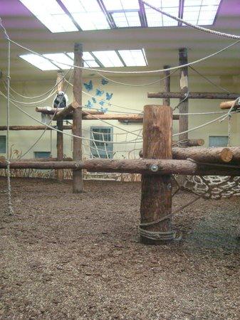 Veszprem Zoo : Monkeys
