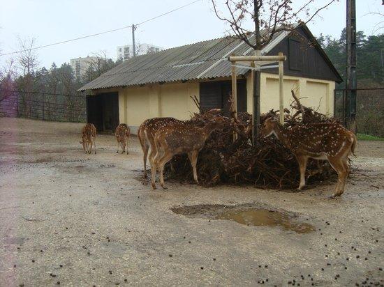 Veszprem Zoo : Feeding time