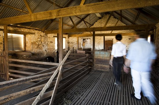 Kingsford Homestead's Historic Shearing Shed