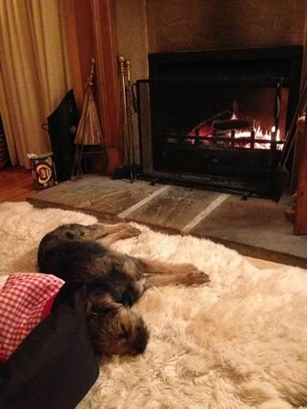 Finglen House Bed & Breakfast: George relaxing in front of the fire :-)