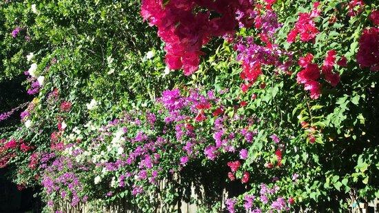 Ocean House: Lovely flowers in parking area