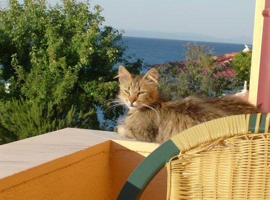 Villa Eva: Visiting cats