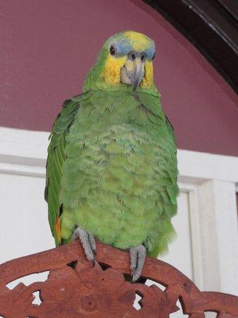 Un Pied a Terre Guesthouse : The house pet, a parrot!