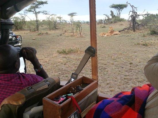 Eagle View, Mara Naboisho: Løver