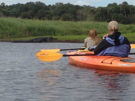Almost Heaven Kayak Adventures: coming back, we nearly drifted right into alligators!