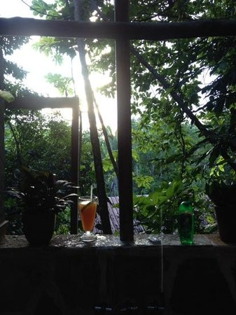 Ian Anderson's Caves Branch Jungle Lodge: view from outdoor shower
