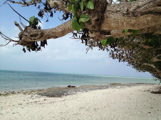 Hoshisuna Beach : 星砂ビーチ