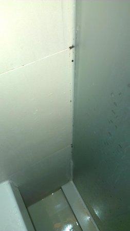 Hotel Baraquda Pattaya - MGallery by Sofitel: Mold in the shower