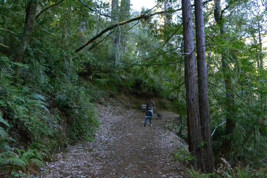 Redwoods River Resort & Campground: The trail heading to the river
