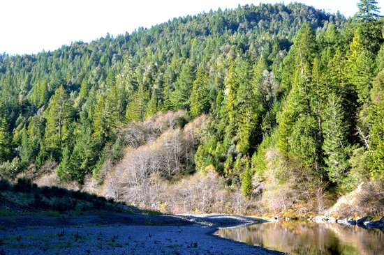 Redwoods River Resort & Campground: The river