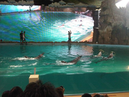 Ancol Dreamland: Dolphin Show #new version#