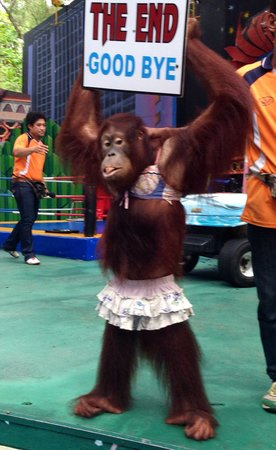 Dusit Zoo: The end of monkey show