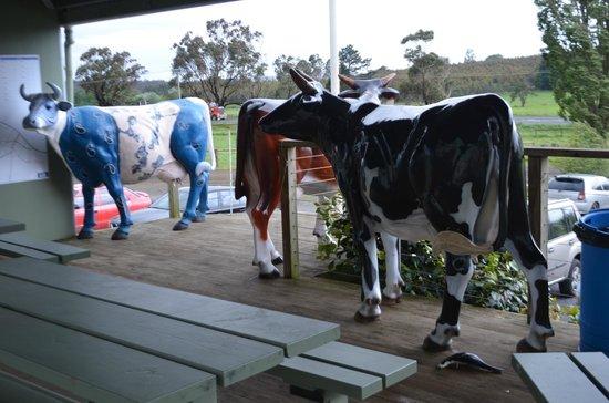 Ashgrove Tasmanian Farm Cheese: Cow (2)