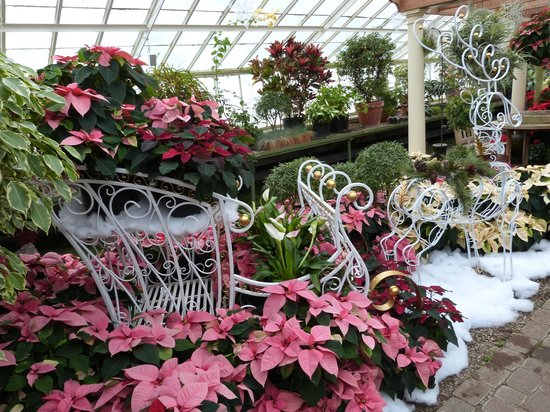 Buffalo And Erie County Botanical Gardens: CHRISTMAS DISPLAY