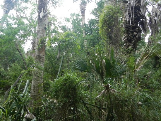 Sabal Palm Sanctuary: Nature
