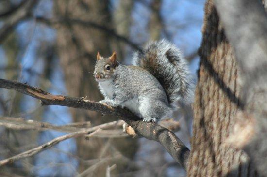 Parc Michel-Chartrand : Les écureuils pas farouche du tout