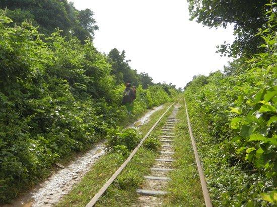 Bamboo Train: rien au loin !