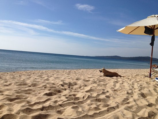 Freedomland Phu Quoc Resort: Ong Lang beach - private space for Freedomland guests (wild dog included) ��