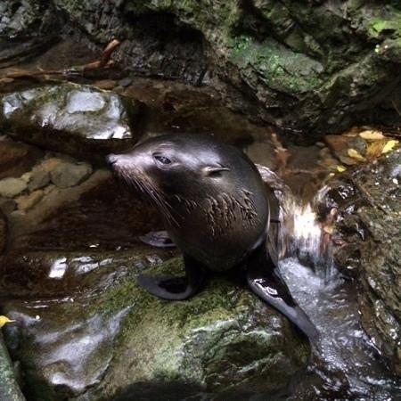 Ohau Stream Walk: little seal pup we found in the stream