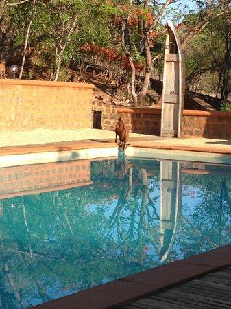 Suarez Hotel : piscine