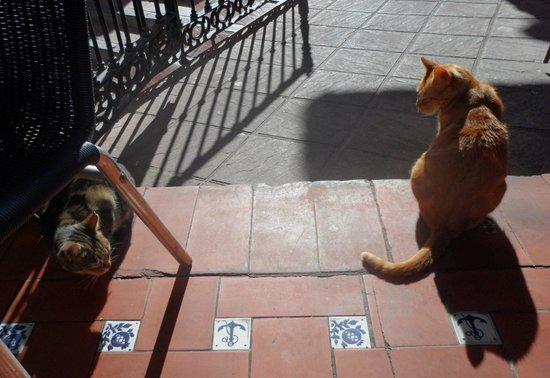 Bodegas Quitapenas: Kattene kunne være tvillinger til vore egne. Opførte sig eksemplarisk.