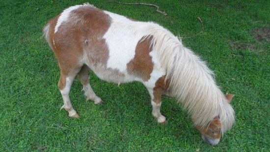 Bundu Lodge: Mini Horses!!