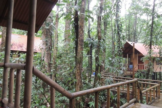 Evergreen Lodge: foret tropicale