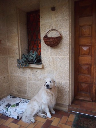 Viguiere Provence : 出迎えてくれるモカちゃん