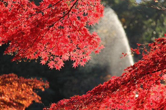 东京奇迹骑行