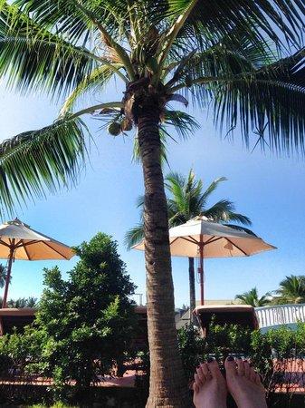 Sofitel Krabi Phokeethra Golf & Spa Resort: Blick von einer Liege
