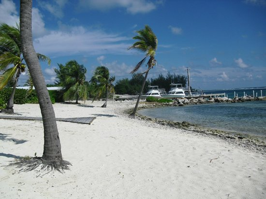 Cayman Brac Beach Resort: Dive boats on Property