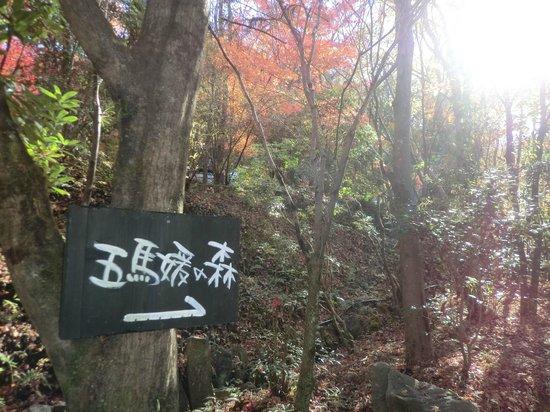 Sanso Tensui: 庭を散策