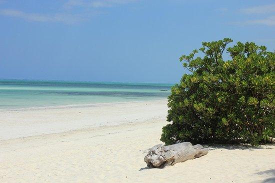 Melia Zanzibar: We were here every day )