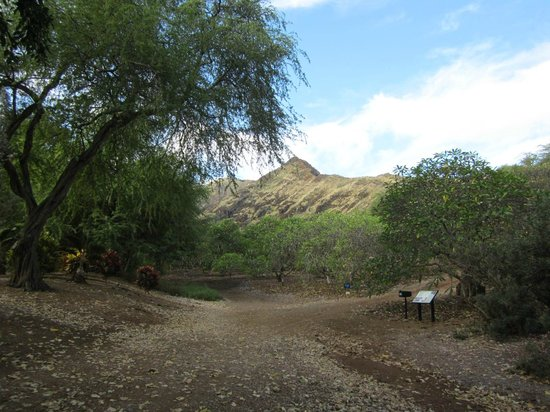 Near The Entrance Looking Into The Garden Picture Of Koko Crater Botanical Garden Honolulu